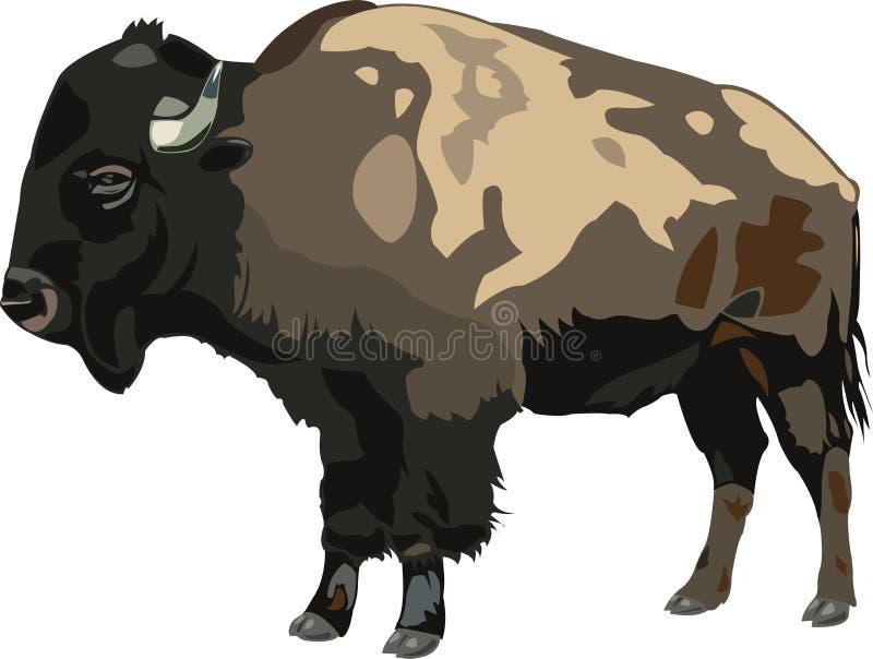 Bisonte americano ilustración del vector