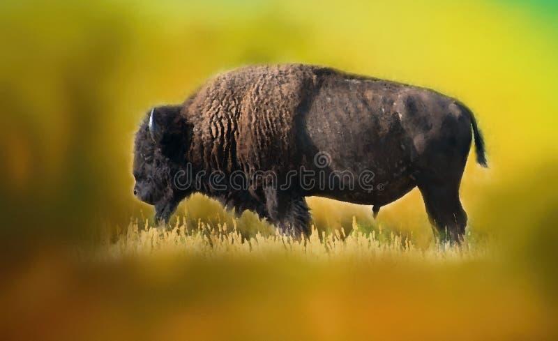 Bisonte americano, Buffalo, illustrazione del manifesto illustrazione di stock