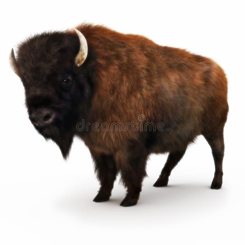Bisonte americano en un fondo blanco stock de ilustración