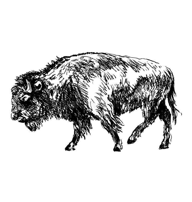 Bisonte del bosquejo de la mano libre illustration