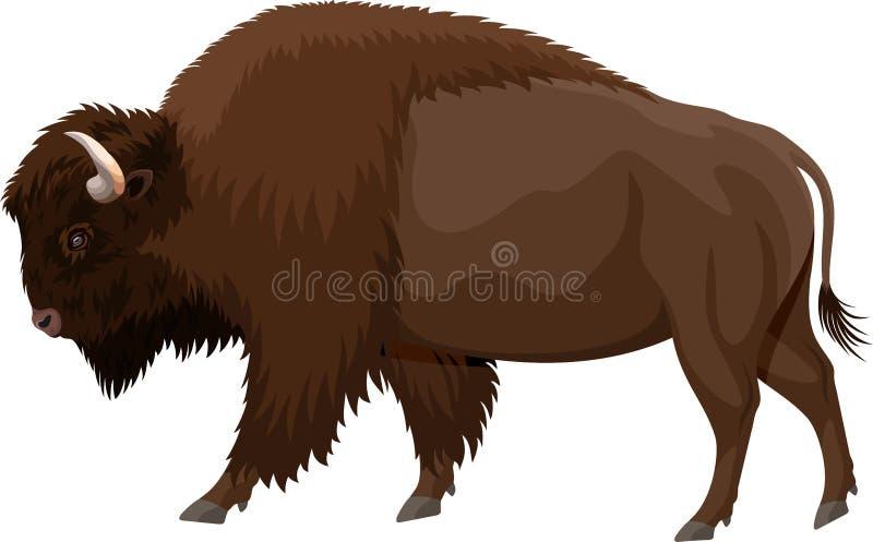 Bisonte marrom do búfalo do zubr do vetor ilustração stock