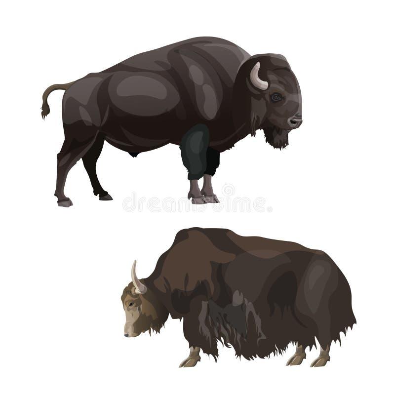 Bisonte y yacs ilustración del vector