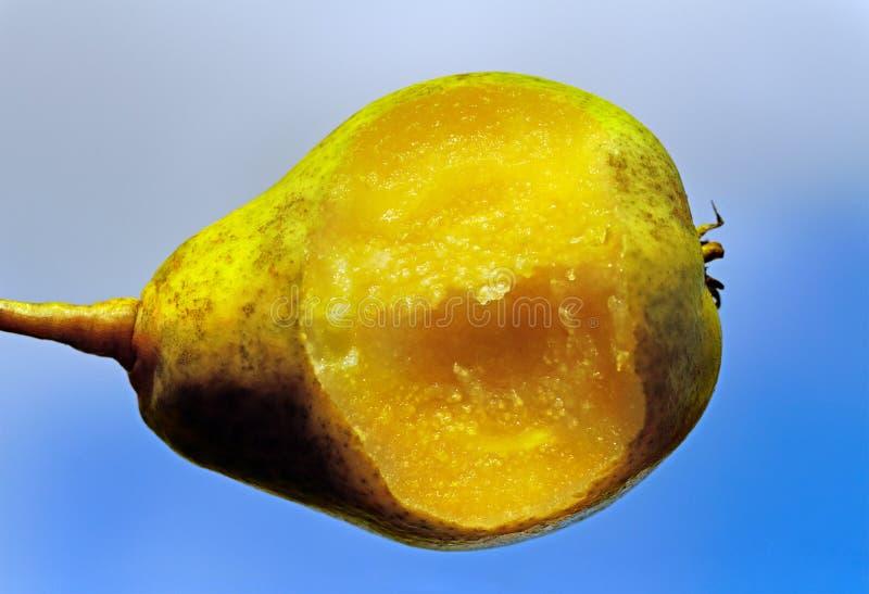 Bit pear.