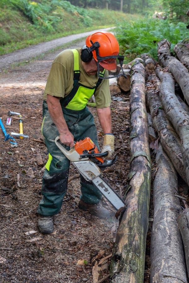 Bitande träd för skogsarbetare med en chainsaw royaltyfri fotografi