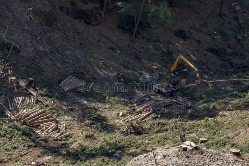Bitande träd för skogsarbetare royaltyfri foto