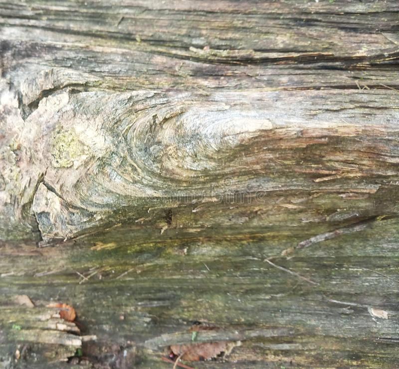 Bitande träd, skäll, wood textur royaltyfri foto