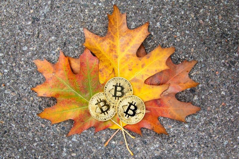 Bitcoin在五颜六色的秋叶的三枚物理金黄硬币 图库摄影
