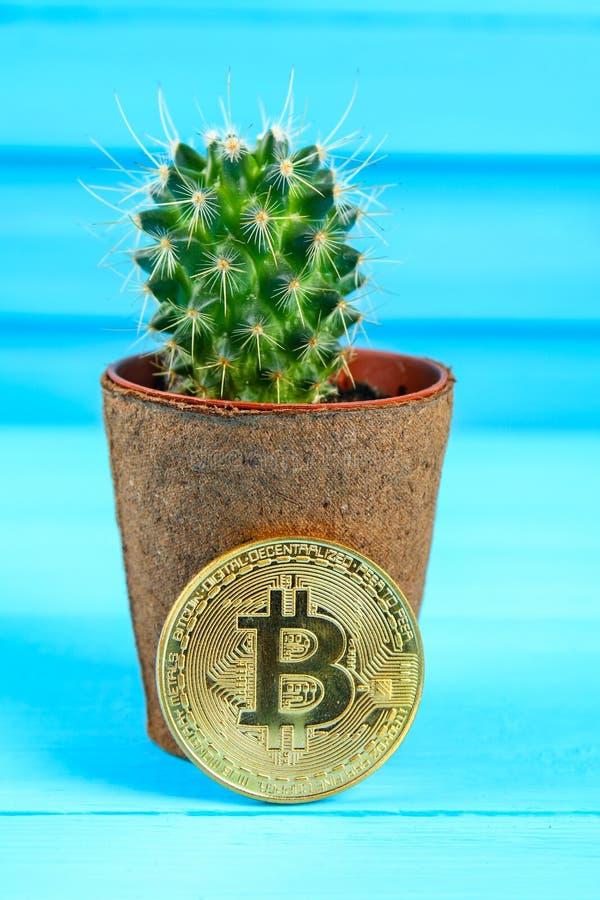 Bitcoin και κάκτος Τραχιά σειρά μαθημάτων bitcoin Φόβος της απώλειας, υψηλή τιμή στοκ φωτογραφίες