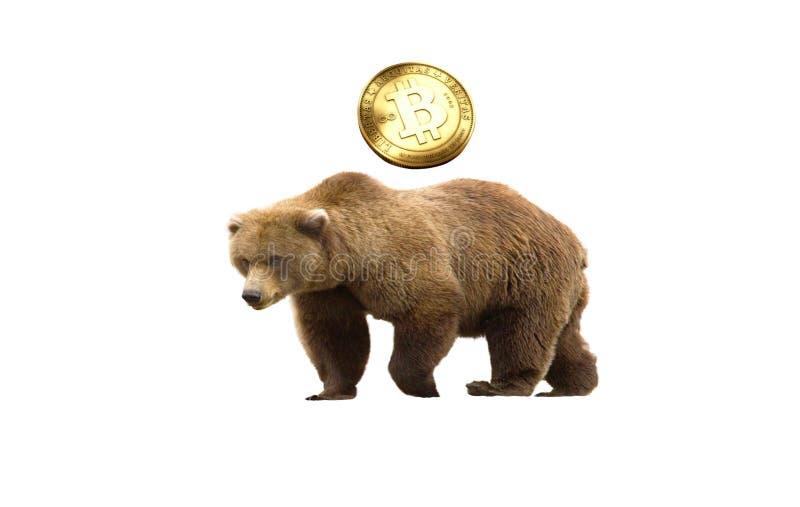 Bitcoin björn royaltyfria bilder