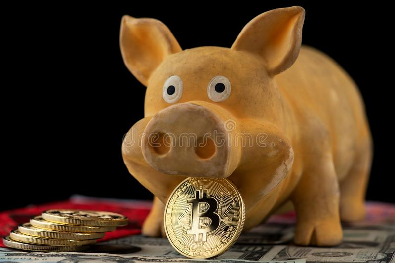 Bitcoin Chinese new year concept Chinese Zodiac sign year of pig Bitcoin RMB Renminbi Pig Chinese New Year Red envelope royalty free stock photography