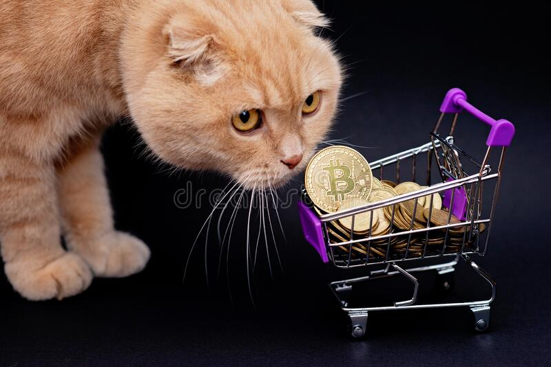 cat coin cryptocurrency