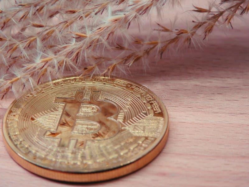Bitcoin con las semillas secadas fotos de archivo