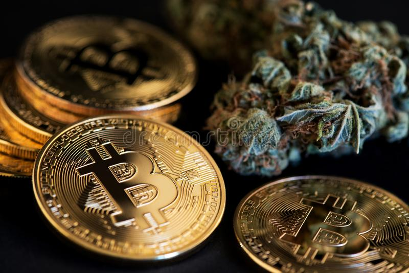Bitcoin Cryptocurrency coins with Cannabis Medical Marijuana Buds. CBD Oil stock images