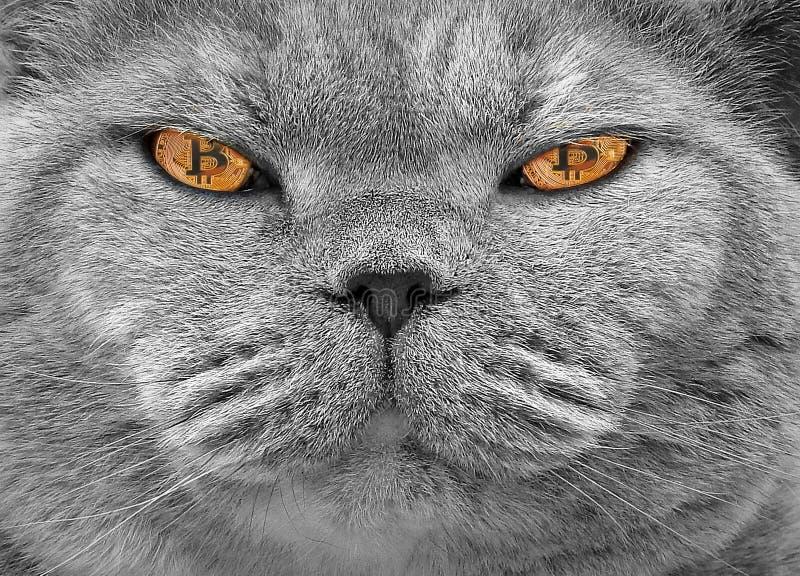 Bitcoin cryptocurrency kota oczy obrazy stock