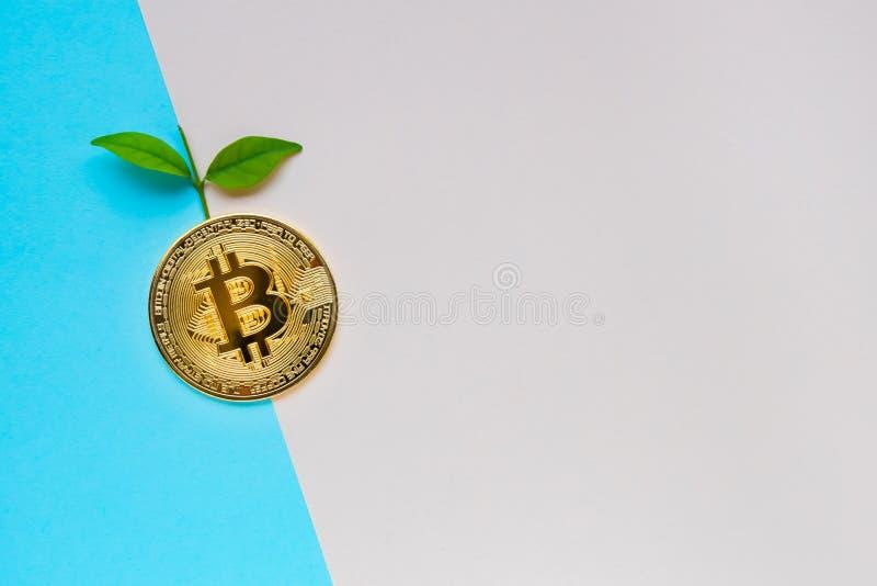Bitcoin de oro con las hojas imágenes de archivo libres de regalías