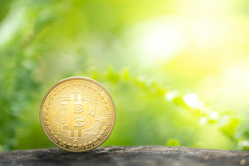 Bitcoin de oro en fondo del verdor foto de archivo