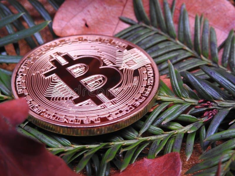 Bitcoin del otoño fotografía de archivo