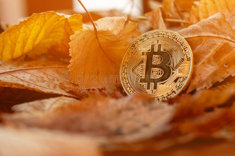 Bitcoin do ouro com leafes do outono no fundo foto de stock