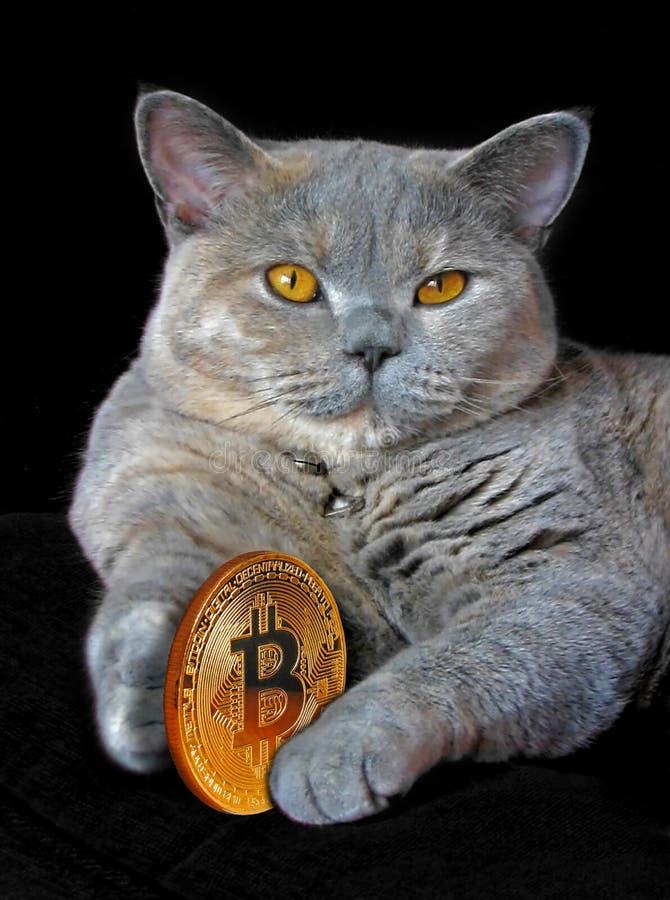 Bitcoin e gato da pedigree imagens de stock royalty free