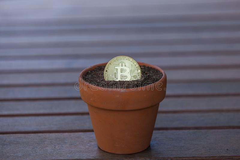 Bitcoin in einem Blumentopf gef?llt mit Boden stockbild