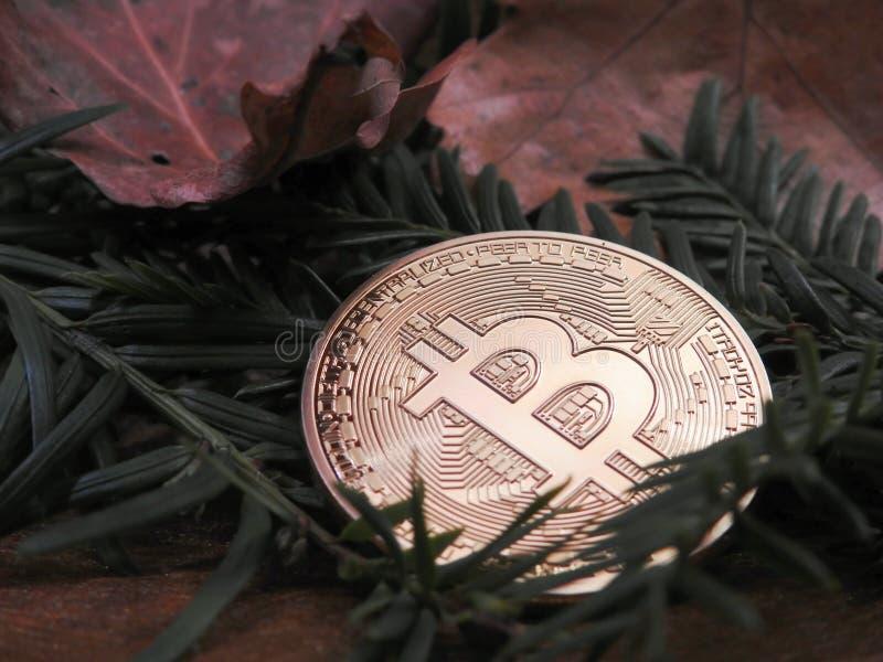Bitcoin en el bosque fotos de archivo libres de regalías
