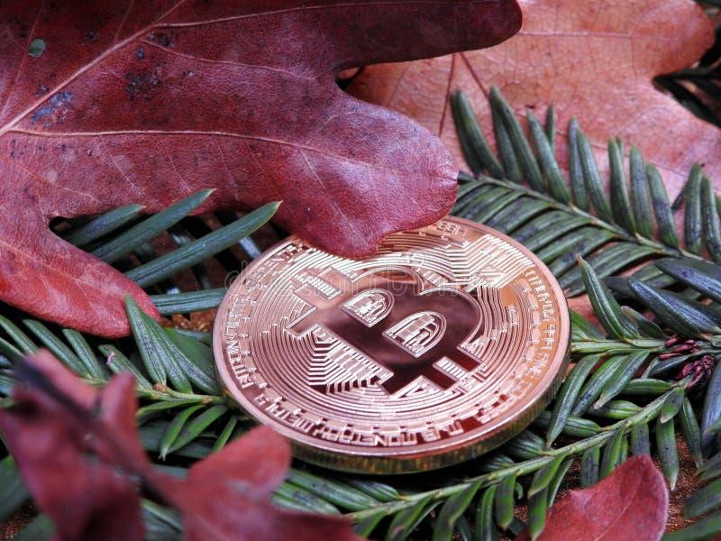 Bitcoin en el parque imagen de archivo