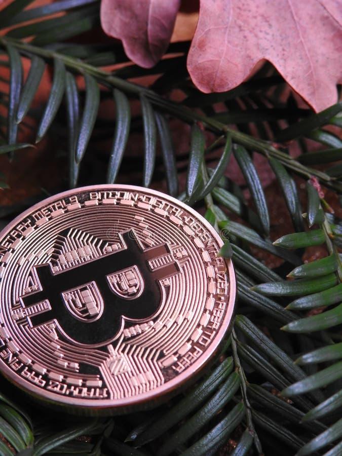 Bitcoin en naturaleza foto de archivo