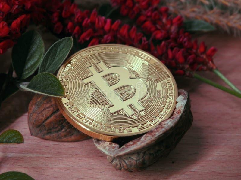 Bitcoin en una cáscara de nuez abierta foto de archivo libre de regalías