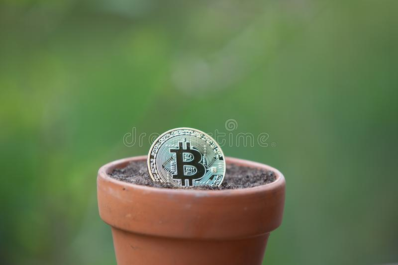 Bitcoin in a Flower pot filled with soil stock image