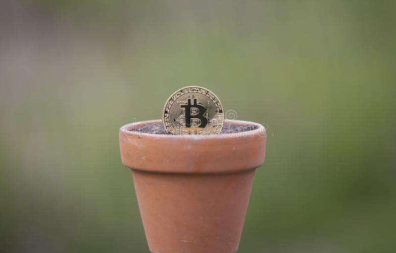 Bitcoin in a Flower pot filled with soil royalty free stock image