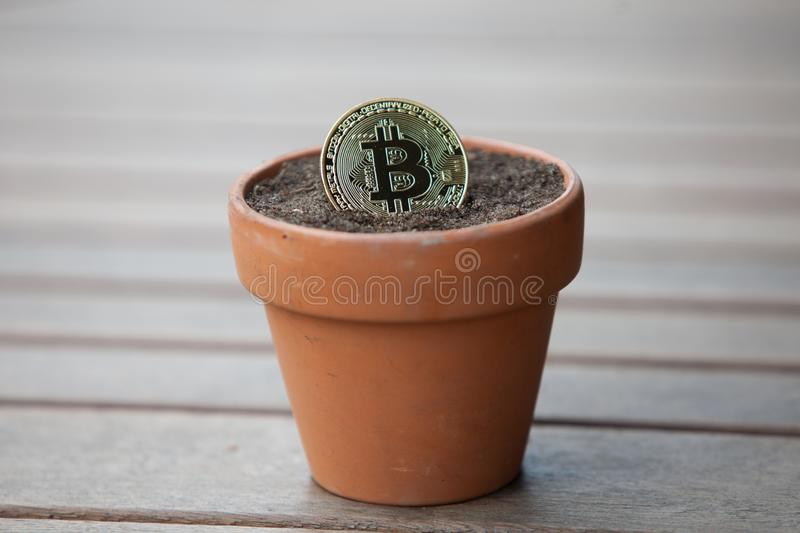 Bitcoin in a Flower pot filled with soil stock photo