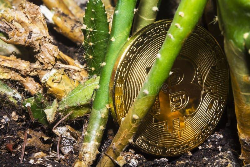 Bitcoin-Kaktus lizenzfreie stockbilder
