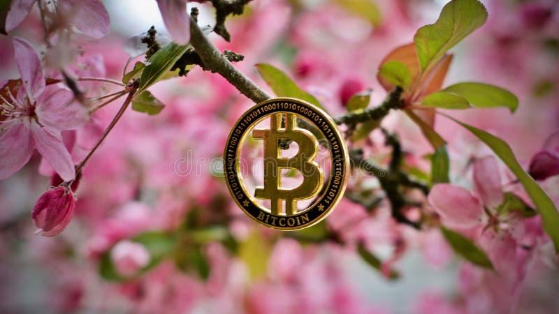 Bitcoin - moneda digital fotografía de archivo