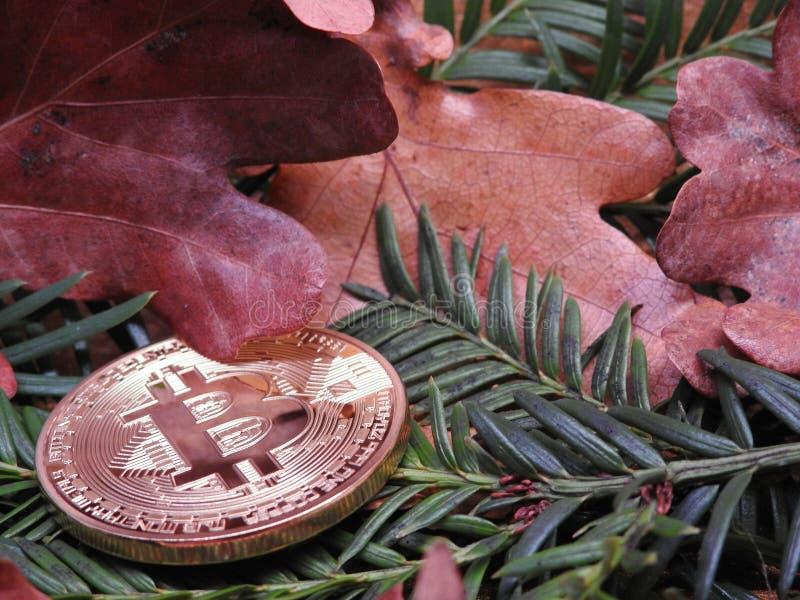 Bitcoin natural fotografía de archivo