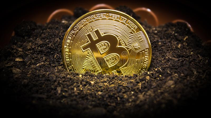 Bitcoin is planted in the ground for its growth. Bitcoin in a flower pot royalty free stock photo