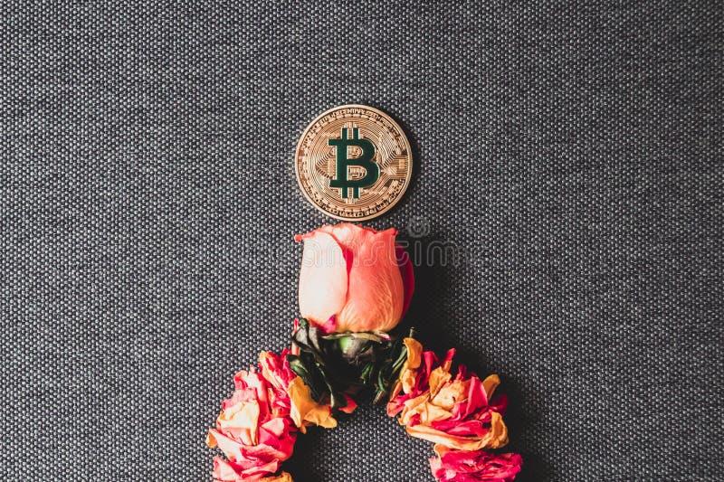 Bitcoin r od kwiatu róża pojęcie stopnie wzrostu cryptocurrencies zdjęcia stock