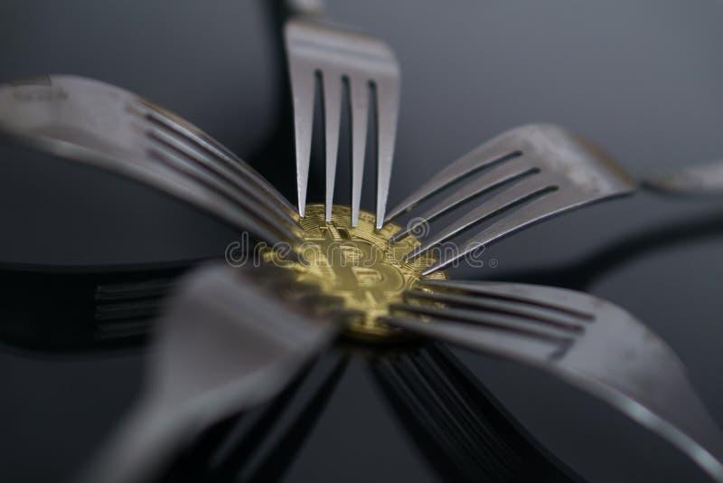 Bitcoin som får ny hård gaffeländring, fysiskt guld- Crytocurrency mynt under gafflar royaltyfria foton