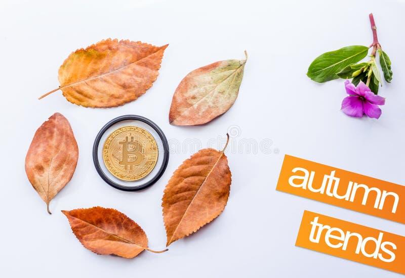 Bitcoin w centrum spadać jesień liście i Małe menchie kwitniemy fotografia royalty free