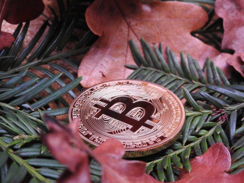 Bitcoin y hojas fotografía de archivo libre de regalías