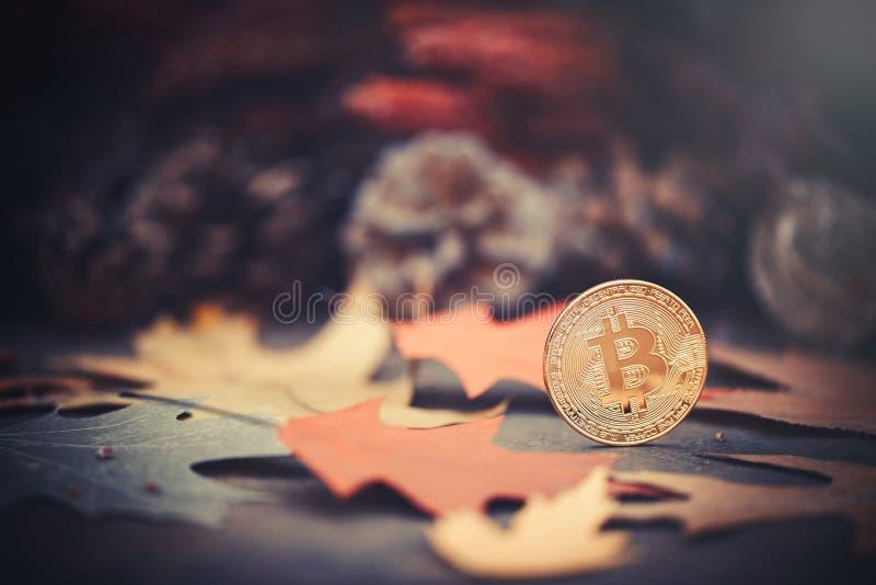 Bitcoin Złociste monety w jesień barwiących liściach Pojęcie przyrosta i gospodarki bitcoins fotografia royalty free