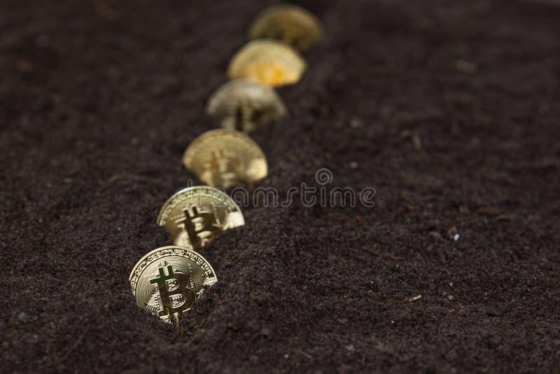 Bitcoins in Folge im Gartenboden lizenzfreies stockfoto