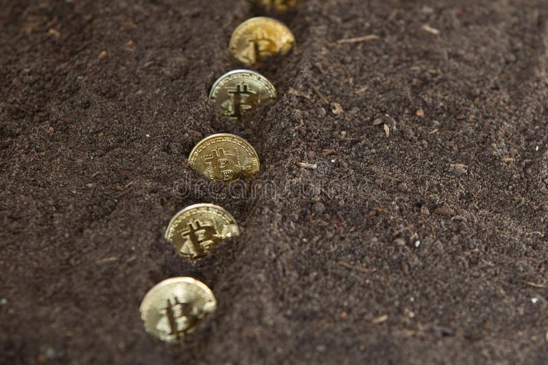Bitcoins seeded in a row in garden soil stock images
