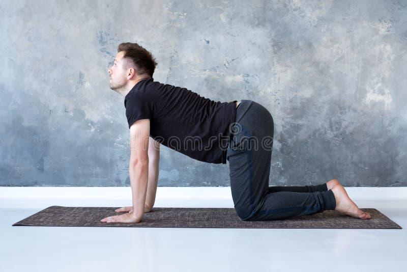 Bitilasana do asana da ioga das práticas dos homens do iogue ou pose nova da vaca do gato fotos de stock