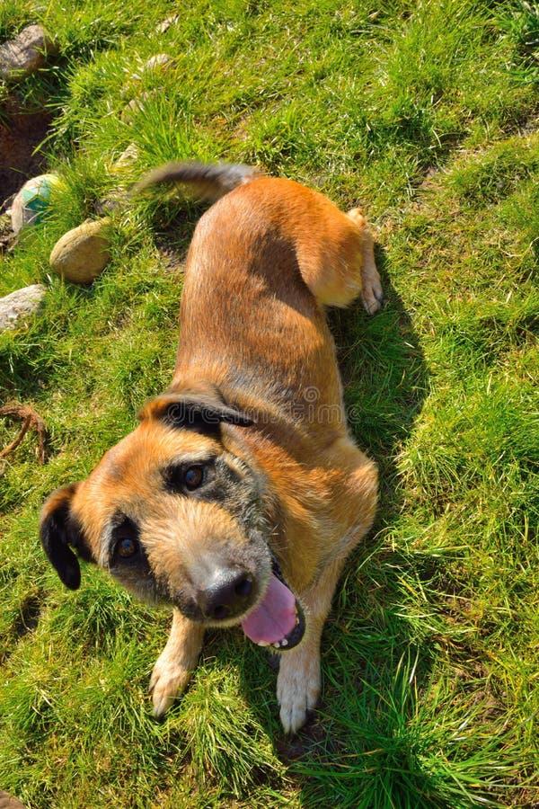 Bitten des Hundes auf einer grünen Rasenfläche lizenzfreies stockfoto