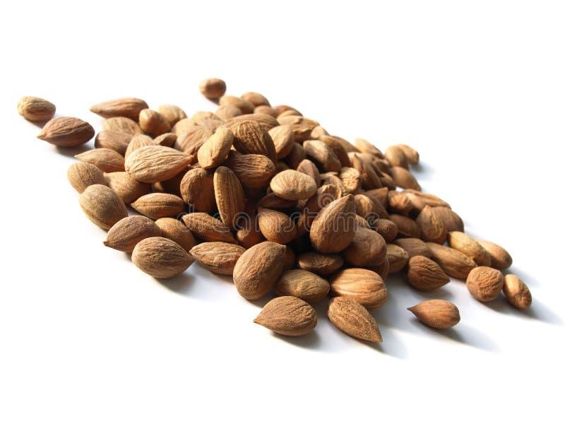 Download Bitter apricot kernels stock image. Image of organic - 24458301
