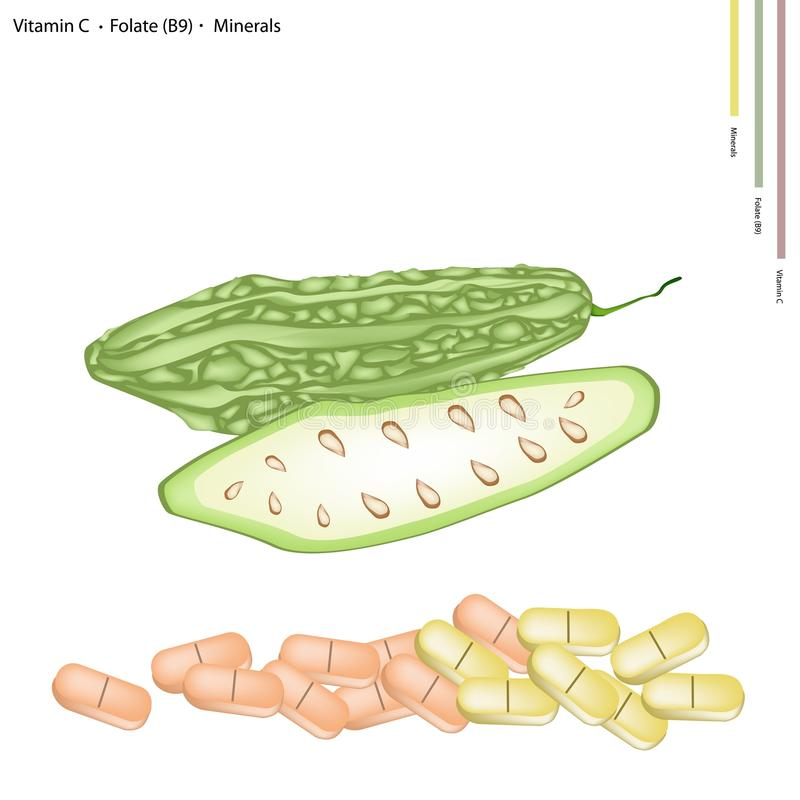 Bitter Gourd with Vitamin C, B9 and Minerals. Healthcare Concept, Fresh Balsam Pear, Balsam Apple, Bitter Gourd and Bitter Melon with Vitamin C, Folate B9 and stock illustration