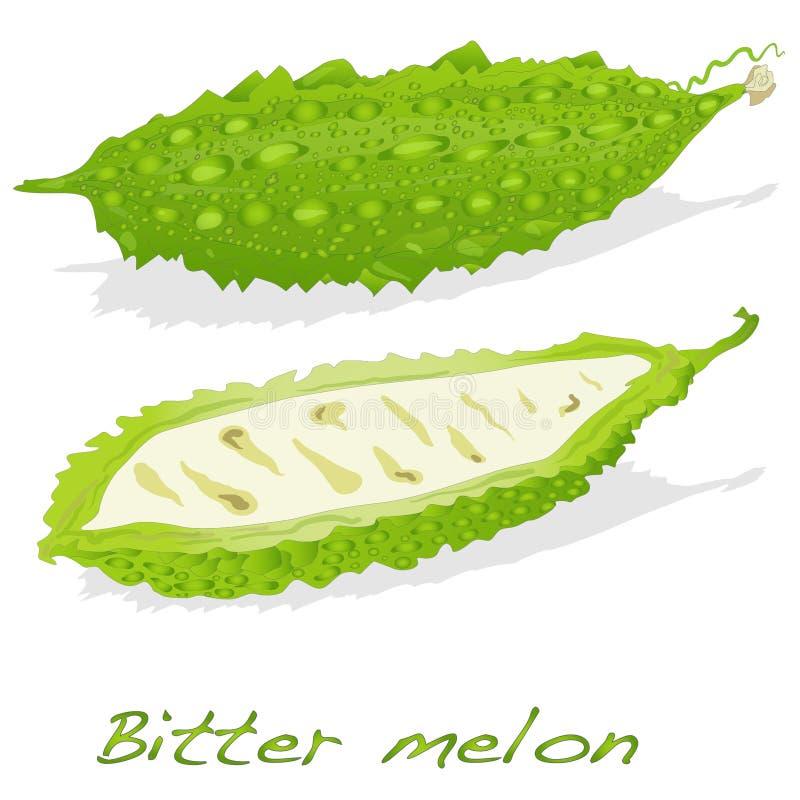 Bittere geïsoleerded meloen vector illustratie