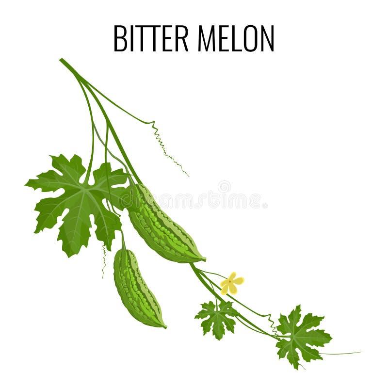 Bittere Melone auf dem weißen Hintergrund lokalisiert lizenzfreie abbildung
