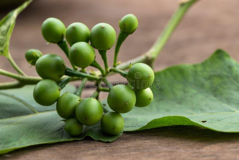 Bitteres Pea Eggplant stockbild