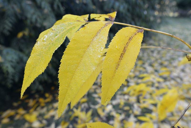 Bitternutboom royalty-vrije stock foto's